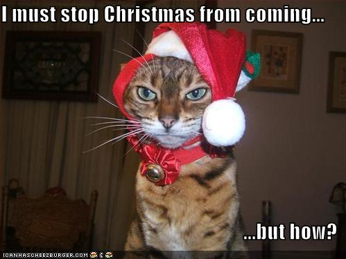 cat-stopping-christmas1
